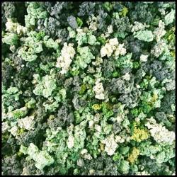 Green Foliage - Mixed-Green Bushes - SCENIC TUB - Miniature Basing System